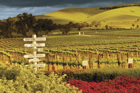 Panorama Barossa Valley en Australie