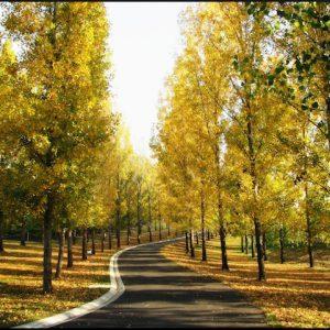 Forêt Yarra Valley en Australie