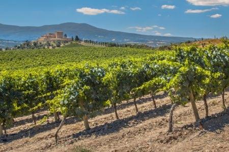 Les vignes de la Rioja et du nord de l'Espagne