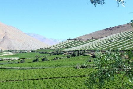Les vins du désert le plus sec du monde dans l'Atacama