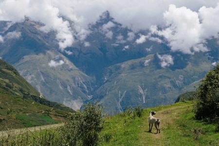 Dégustation de vin- Carahuasi - Pérou