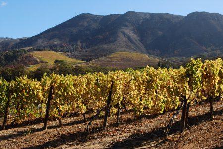 Groot constantia en Afrique du Sud