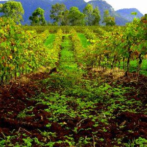Hunter Valley vignoble en Australie