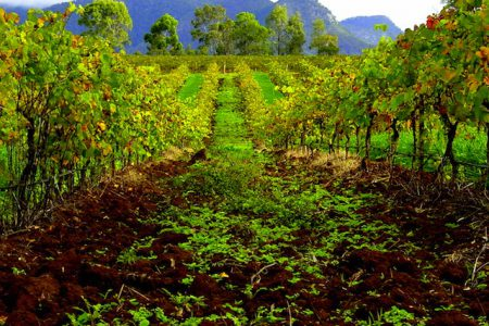Hunter Valley vignoble en Australie