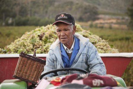Viticulteur Afrique du Sud