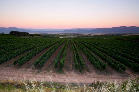 Vignes en Afrique du Sud