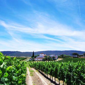 Notre itinéraire Les plus beaux vignobles du Douro en 8j Vino Mundo
