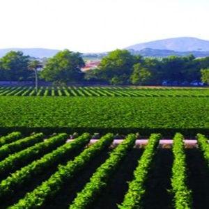 Vignes - Portugal