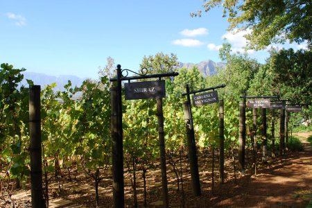 Cépages sud-africains