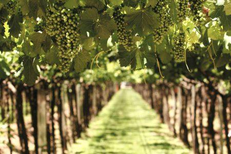 Argentine & Chili : la grande traversée viticole