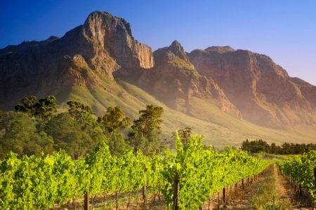 Vignoble à Franschhoek en Afrique du Sud