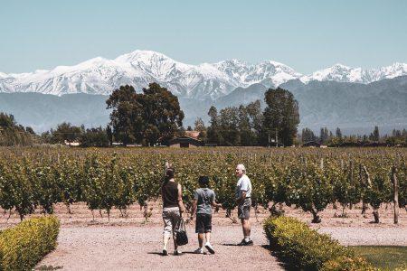 Vignes près de Mendoza