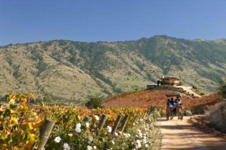 Route du vin Colchagua au Chili