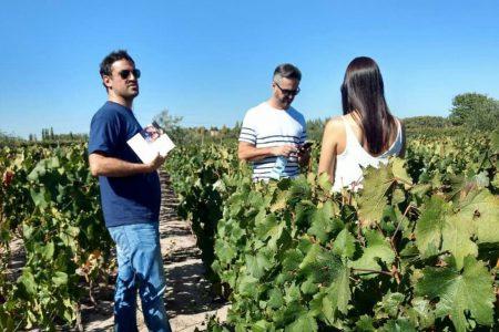 Visite de vignes en Argentine