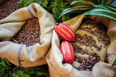 Fèves cacao equateur