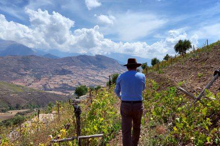Equateur-vignes