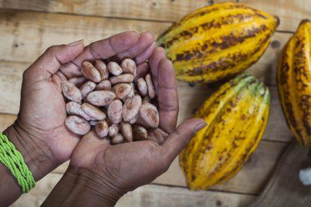 Equateur-cacao