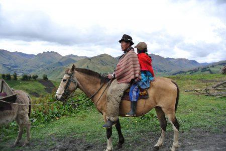 Equateur - L'âne comme moyen de locomotion en altitude