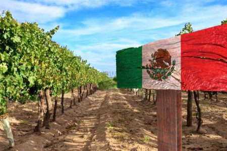 Vignoble mexicain