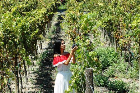 Mexique, Vignoble de la vallée de Guadalupe en Basse Californie