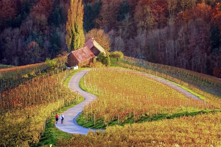 Slovenie, route en coeur vignobles en automne