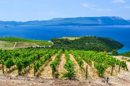Domaines viticoles du sud de la Croatie.