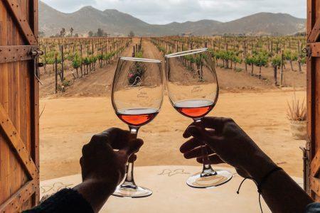 vignoble dans la Vallée de Guadalupe, Mexique