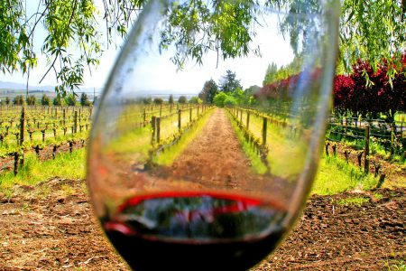 Dégustation de vin dans vignoble Mexicain